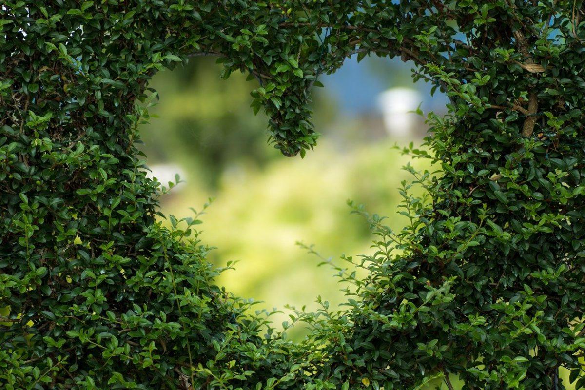 Piękny oraz miły dla oczu ogród to zasługa wielu godzin spędzonych  w jego zaciszu w trakcie jego pielegnacji.